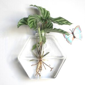 Wall Hanging Hydroponic Glass Vase Transparent Fish Tank Green Plant Plant Pot Creative Home Wall Hanging Decorations