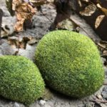 Pokich Simulation Moss Flocking Fake Stone Landscape Multi Meat Imitation Moss Lawn Fluff Diy Decorative Accessories